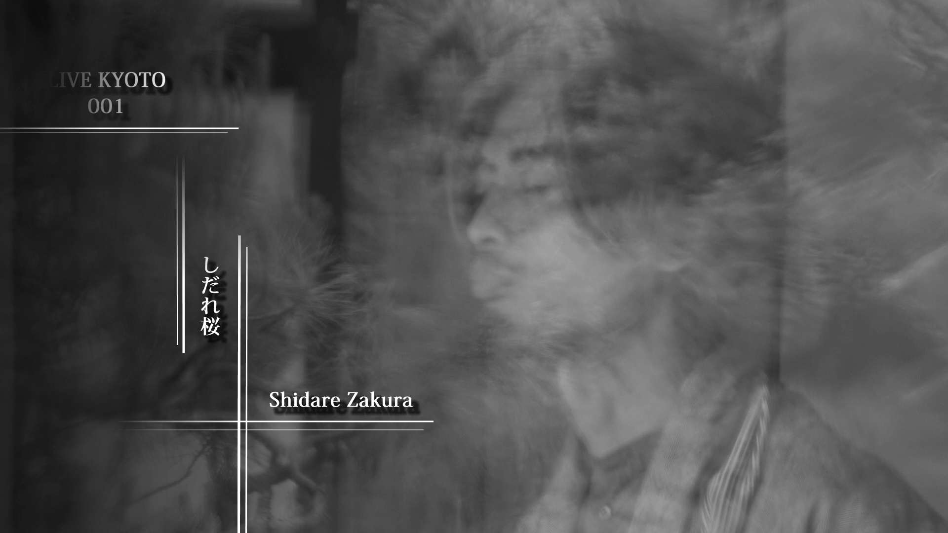 LIVE KYOTO 001 しだれ桜 ShidareZakura