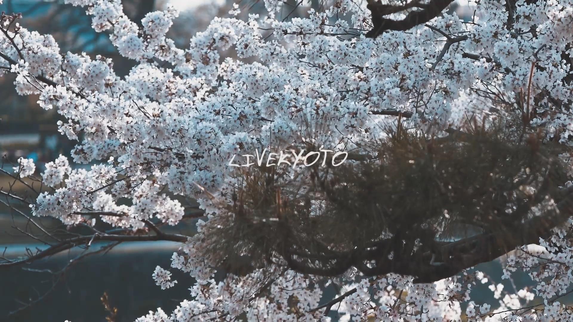 さくらさくら〜花〜いぞみ(Japanese Guitar 春メドレー)[LIVEKYOTO]